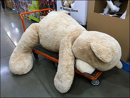 Jumbo Floppy Bear on Dolly