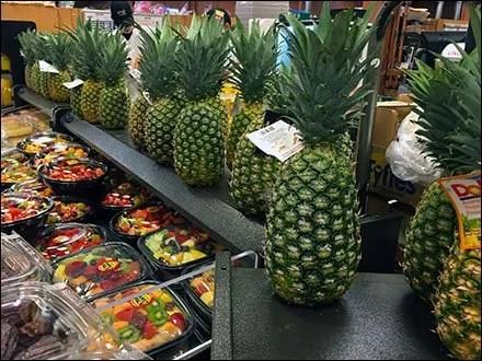 Pineapple Hedge Main