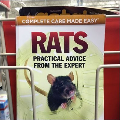 Rat Care As Category Captain Front