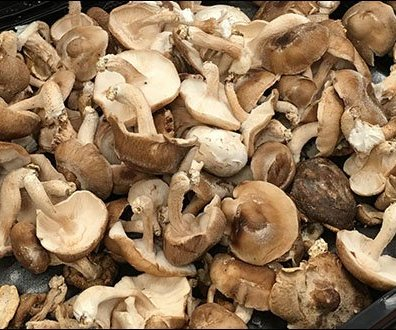 Produce - Merchandising Mushrooms By Texture 3