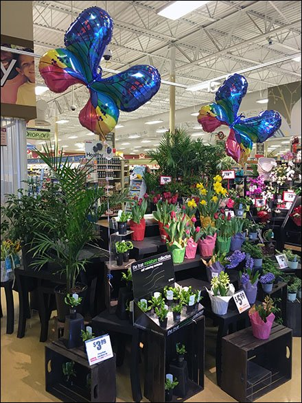 Butterfly Inflatable Weise Floral Main