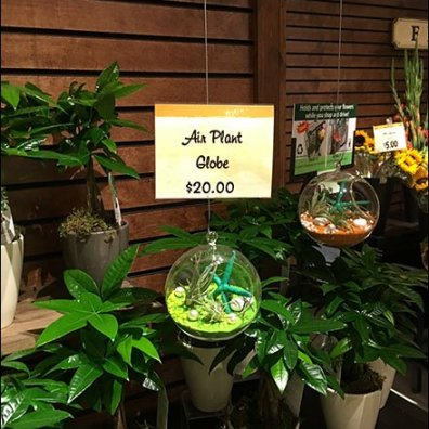 Air Plant Globe Fishing Line Presentation 1