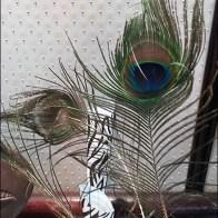 littmans-jewelers-diamond-party-peacock-feather-display-3