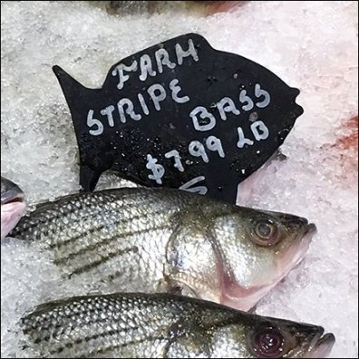 gourmanoff-iced-fish-labels-feauture
