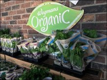 live-organic-herb-and-spice-display-3