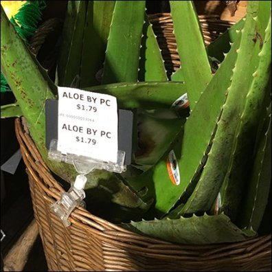 Aloe-By-The-Piece Wicker Basket Merchandising