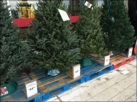 Do it yourself christmas tree pricing system fixtures close up do it yourself christmas tree id kit main solutioingenieria Choice Image