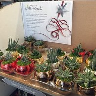 Magnetic Air Plants Display For LiveTrends