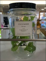 Plantscription® Rx Natural In-Store Display