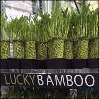 Lucky Bamboo Merchandising Cart Display Feature