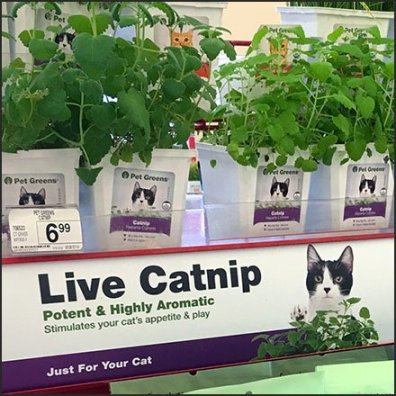 Live Catnip and Pet Greens Merchandising Feature
