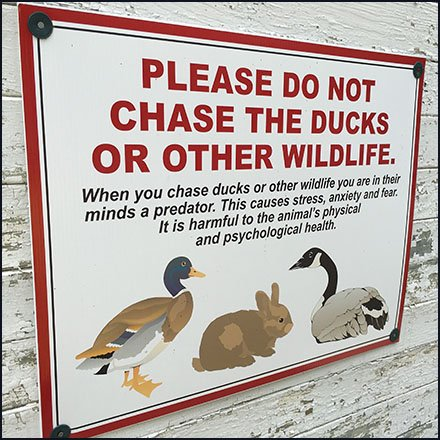 Please Do Not Chase The Ducks Or Wildlife