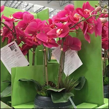 Delicate Orchid Pallet Merchandiser