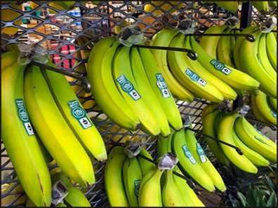 Expanded Metal Wall of Bananas Produce Display