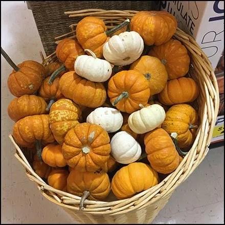 Miniature Pumpkin Wicker Basket Feature