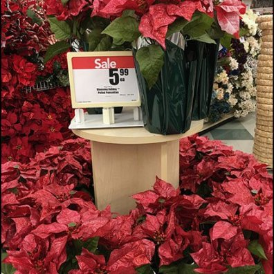 Poinsettia PreSeason Plant Sale 2