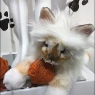 Playful Pet Prop Museum Case At Neiman Marcus