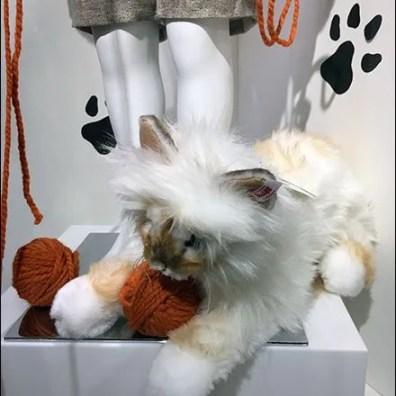 Pet Propped Museum Case 2
