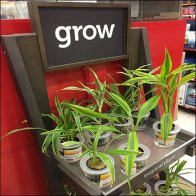 Tropical Plant Stand Sales Cheerleading