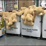 Plush Teddy Bear Pallet Merchandising