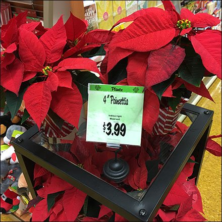 Poinsettia Mobile Cross Sell in Greeting Cards Feature