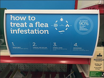 How To Treat Flea Infestation In 4 Steps