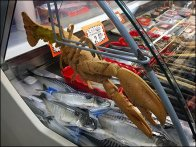 Live Lobster Prop For Seafood Case Display