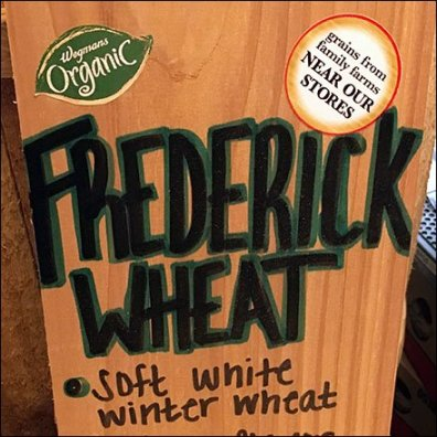 Local Farm Organic Wheat By The Barrel