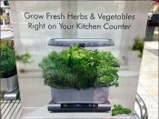 How To Grow Fresh Herbs In Your Kitchen