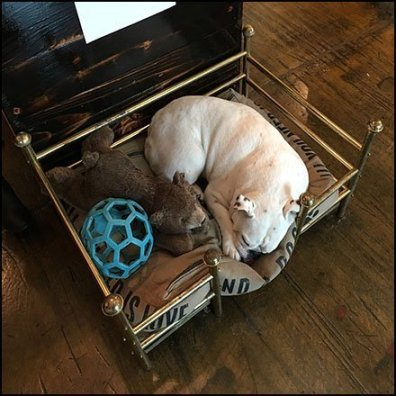 Plush Display Pet Bed Merchandising Feature