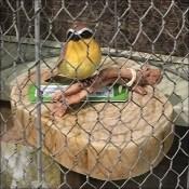 Chicken Wire Birdcage Prop Adds Realism