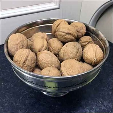 Kitchen Showroom Unshelled Walnuts Propping