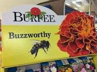Buzzworthy Burpee Seed Corrugated Display