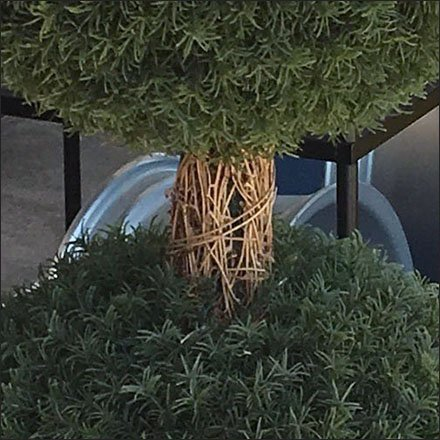 Mercedes Benz Showroom Entry Topiary