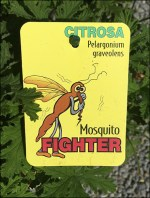 Citrosa Mosquito Fighting Plant Ploy