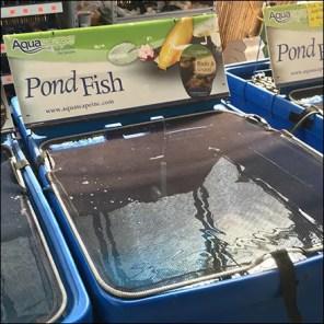 AquaScape Fish Pond Merchandising Tanks