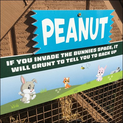 Anti-Social Rabbit Hutch Warning