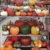 Fall Pumpkin and Gourd Gridwall Construction