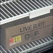 Live-Bait Glass-Door Upright Cooler