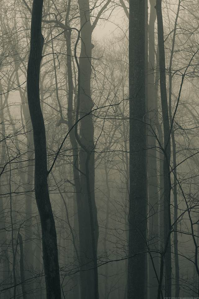 Retina wallpaper-forest