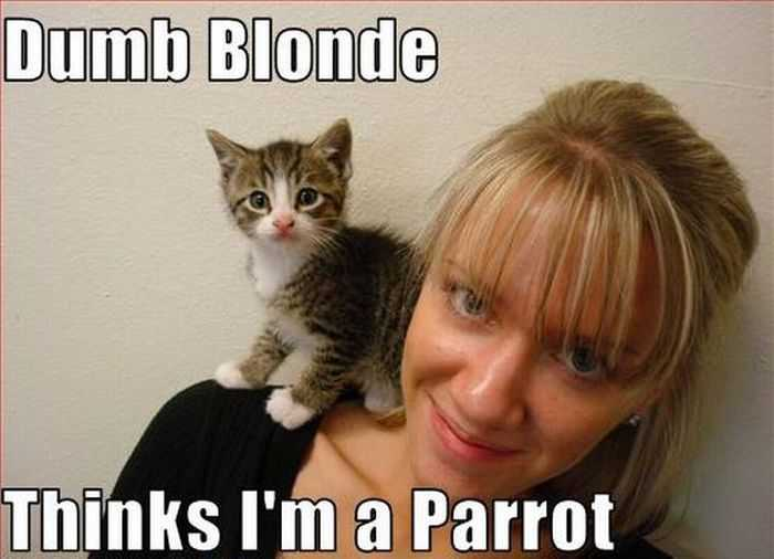 blondes_that_fail_miserably_every_time_36