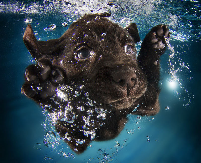 Puppies Diving Into Water