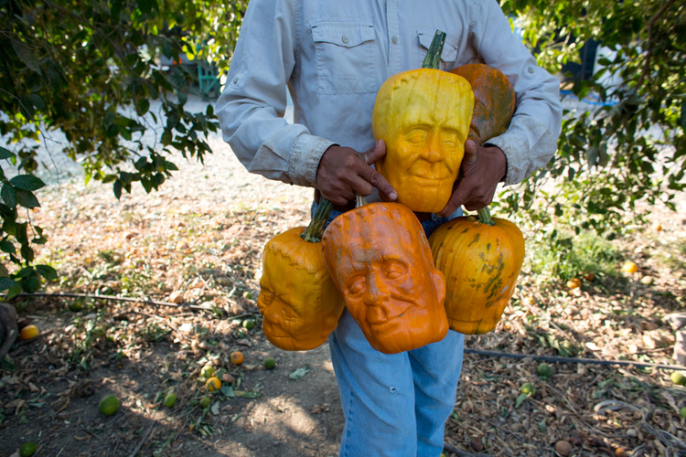 Farmer Grows Pumpkins in Frankenstein Shaped Molds