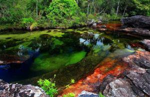 Caño Cristales River, Columbia