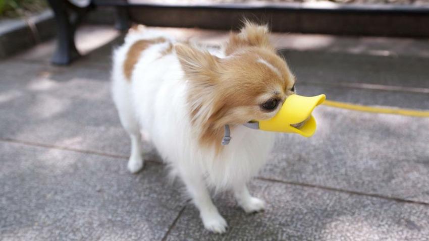 quackbill_0