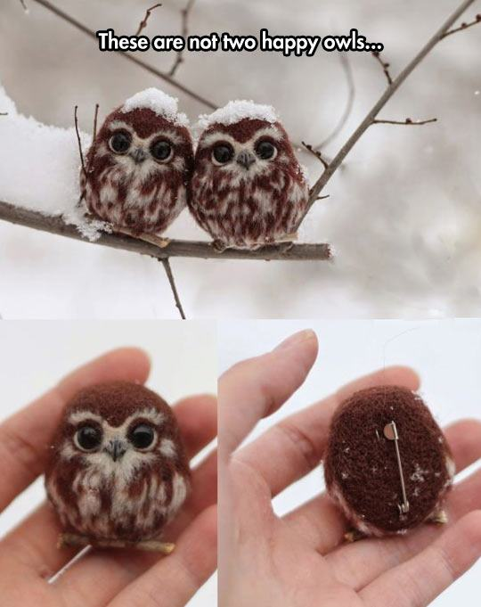 funny-owls-couple-cute-pin-1