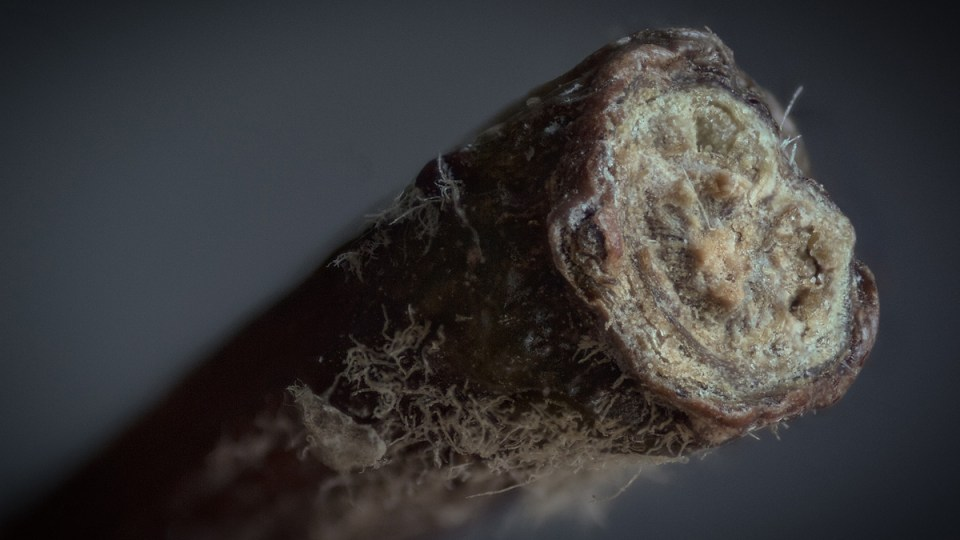 Extreme Close-Ups of Ordinary Things