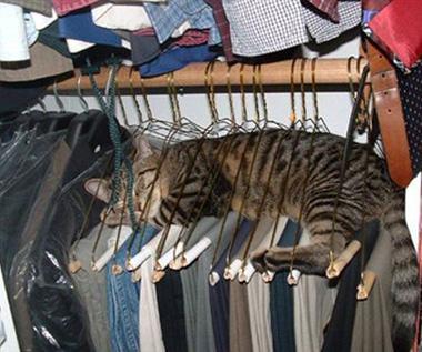 236_Sleeping_cat_920-1