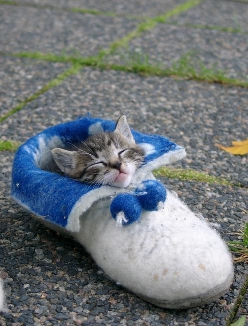 snugged-in-a-slipper8-1