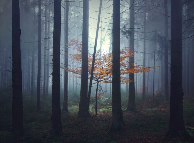 10 European Landscapes Inspired by Grimms FairyTales (1)